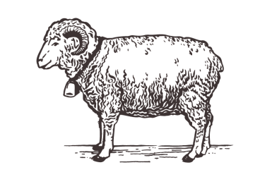 Left-sheep
